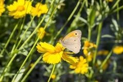 Papillon sur un fleuron image stock