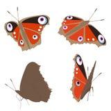 Papillon sur un fond blanc, vecteur Photographie stock