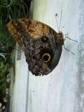 Papillon sur un mur Photographie stock libre de droits