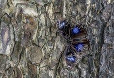 Papillon sur un tronc d'arbre Photo libre de droits