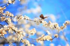 Papillon sur une branche 02 Image libre de droits