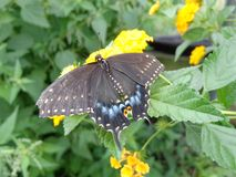 Papillon sur une branche Photographie stock