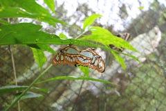 Papillon sur une feuille Photographie stock libre de droits