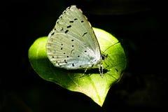 Papillon sur une feuille Photo stock