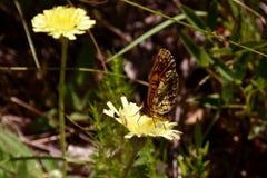 Papillon sur une fleur image libre de droits
