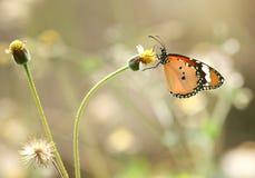 Papillon sur une fleur Photographie stock