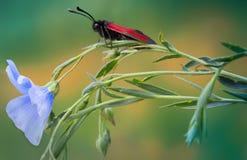 Papillon sur une fleur Photos stock