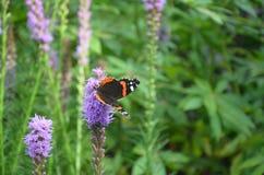 Papillon sur une fleur Photo libre de droits