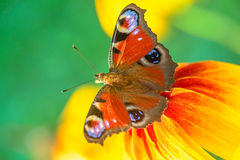 Papillon sur une fleur Photo stock