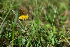 Papillon sur une fleur Photos libres de droits