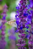 Papillon sur une fleur de pré d'été Photographie stock libre de droits