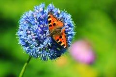 Papillon sur une fleur exceptionnellement belle image stock
