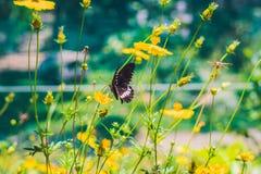 Papillon sur une fleur tropicale en parc de papillon Images libres de droits