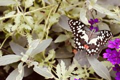 Papillon sur une plante et une fleur photos libres de droits