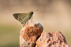 Papillon sur une roche Photo stock