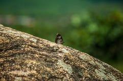 Papillon sur une roche image stock