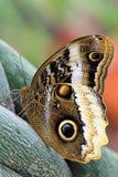 Papillon sur une vrille Images libres de droits