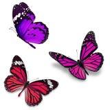 Papillon trois coloré Images libres de droits