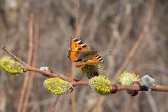 Papillon urticaria photographie stock libre de droits