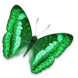 Papillon vert Photographie stock libre de droits
