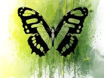 Papillon vert Images libres de droits