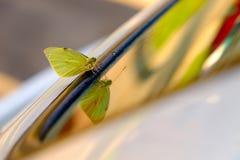 Papillon vert jaunâtre sur la fenêtre de voiture images libres de droits