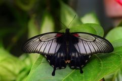 Papillon vibrant photographie stock