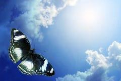 Papillon volant au ciel Photos libres de droits