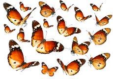 Papillons émigrant le vol Image libre de droits