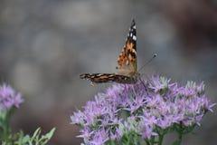 papillons Photo libre de droits