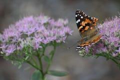 papillons Photo stock