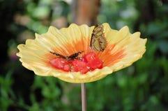 papillons Photos libres de droits
