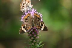 papillons Image libre de droits