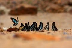 papillons photographie stock libre de droits