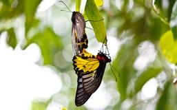 Papillons colorés Photos stock