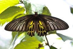 Papillons colorés Photos libres de droits