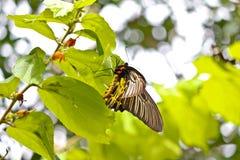 Papillons colorés Image libre de droits