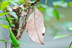 Papillons colorés Photo libre de droits