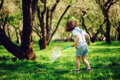 Papillons contagieux de 3 années de garçon heureux d'enfant avec le filet sur la promenade dans le jardin ou le parc ensoleillé Photographie stock libre de droits