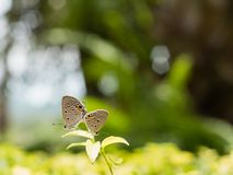 Papillons d'élevage Photo libre de droits
