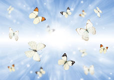 Papillons 3D Photographie stock