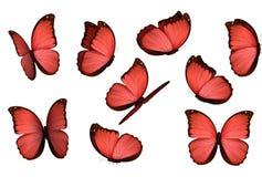 Papillons d'isolement colorés réglés Illustration de vecteur d'amathonte de Morpho de lépidoptères d'insectes de vue Images stock