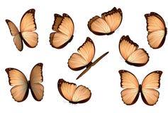 Papillons d'isolement colorés réglés Illustration de vecteur d'amathonte de Morpho de lépidoptères d'insectes de vue Images libres de droits
