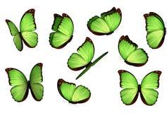 Papillons d'isolement colorés réglés Illustration de vecteur d'amathonte de Morpho de lépidoptères d'insectes de vue Photos libres de droits
