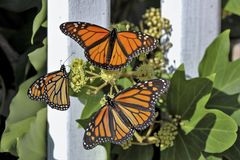 Papillons dans le jardin images stock