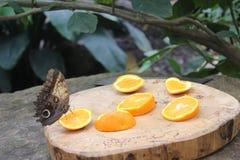 Papillons dans le jardin des papillons Photos libres de droits