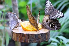 Papillons dans le jardin des papillons Photo libre de droits