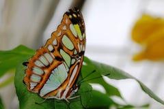Papillons dans le jardin des papillons Photo stock