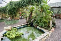 Papillons dans une oasis écologique Image stock
