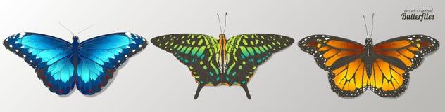 Papillons de vecteur Illustration tirée par la main d'aquarelle D'isolement illustration stock